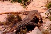 LAST PARADISE Story - Australian Outback 3