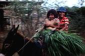 LAST PARADISE Story - Deep into Mexico 3
