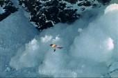 LAST PARADISE Story - Tasman Glacier 8